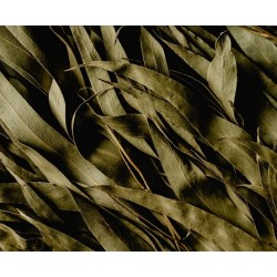 Aceite esencial de Eucalipto (Aromafume)