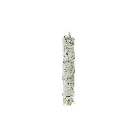 Salvia Blanca de California - 25 cm